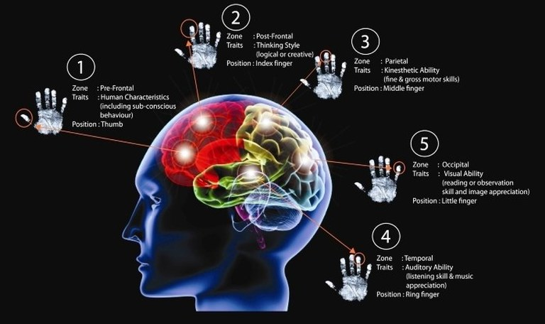 an analysis of human beings through the human brain The novel, of course, is an unequaled medium for the exploration of human social and emotional life and there is evidence that just as the brain responds.